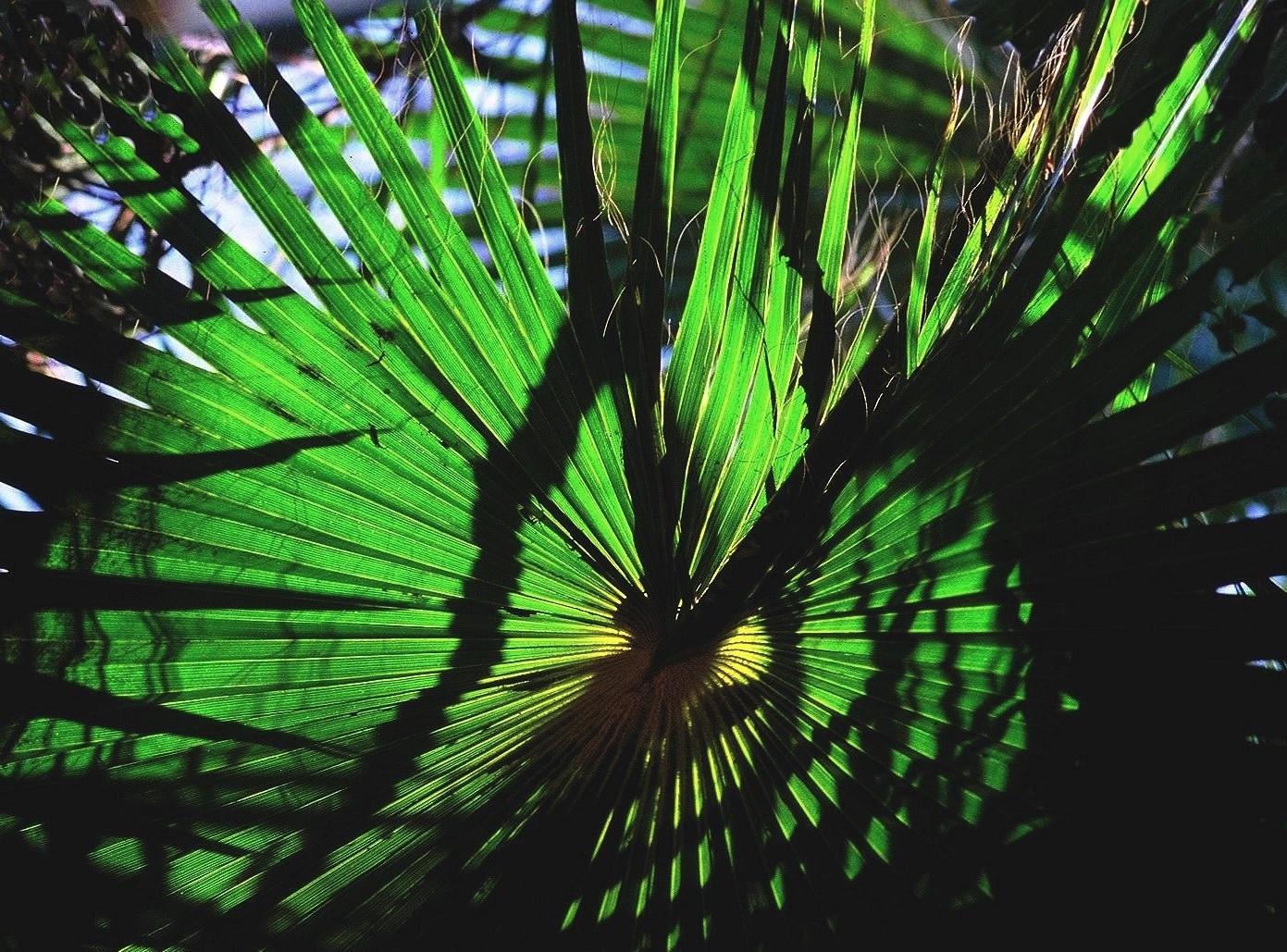 La roue verte