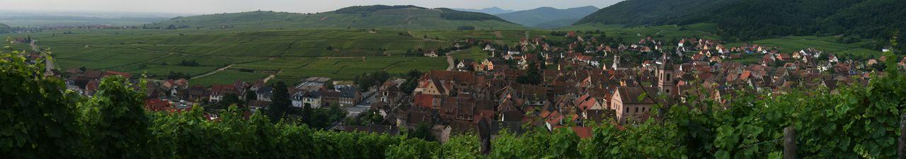 La route des vins d' Alsace