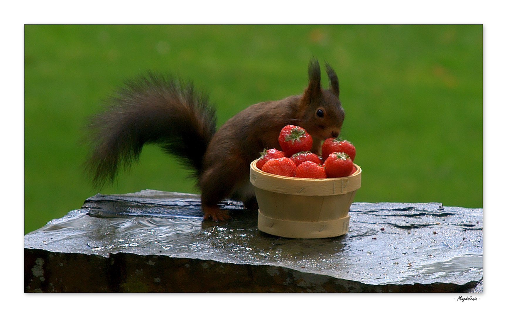 La saison des fraises