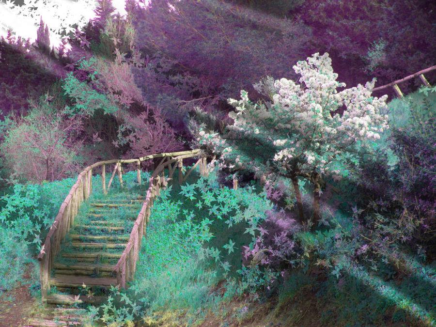 LA SCALA PER IL PARADISO............. ( Stairway to heaven)