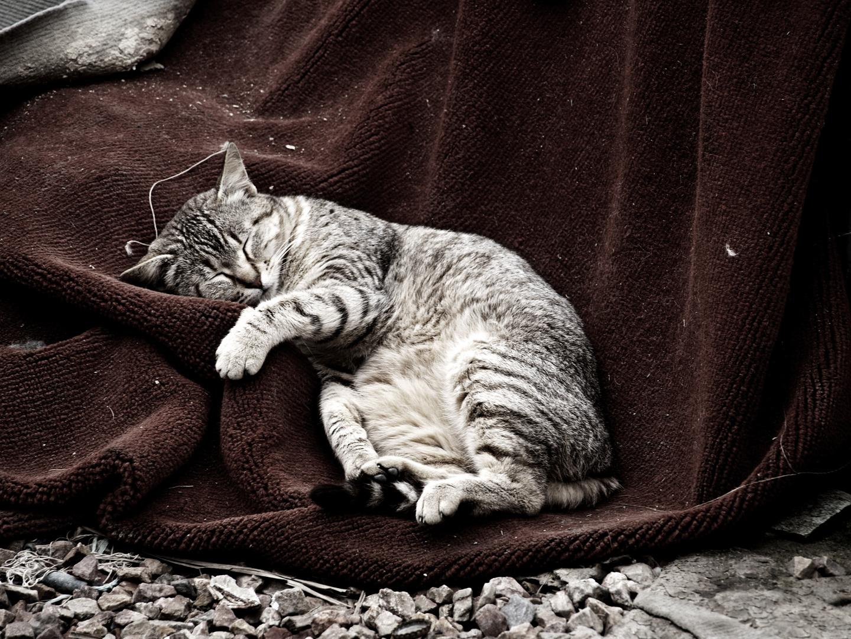 La siesta del gato