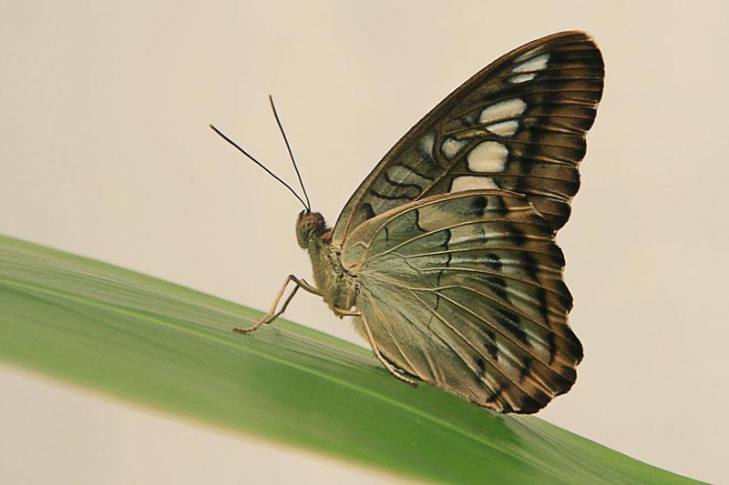 la sieste du papillon