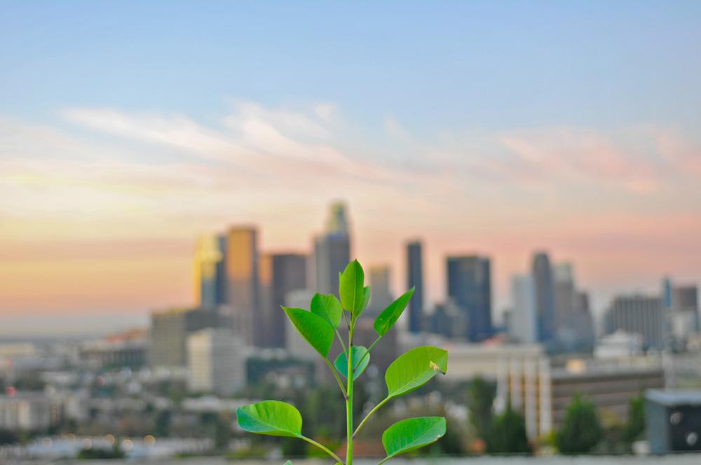 LA skyline from Elysian Park