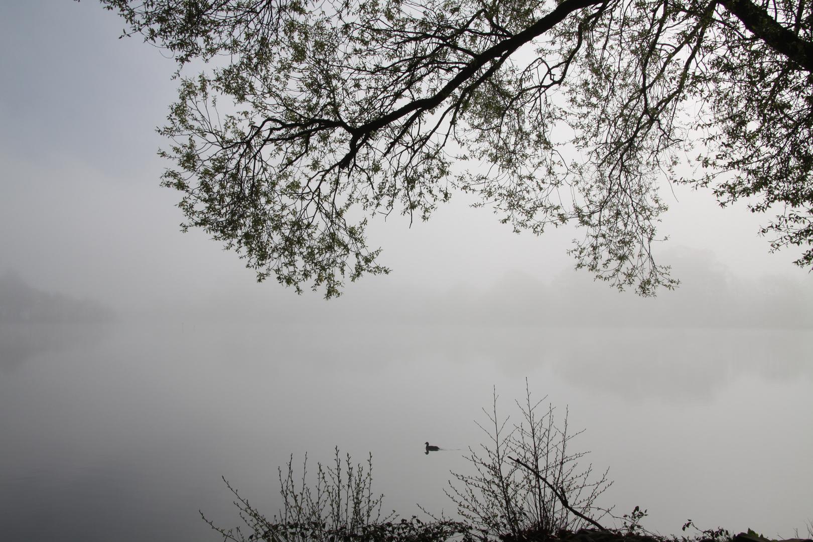 La solitude du canard