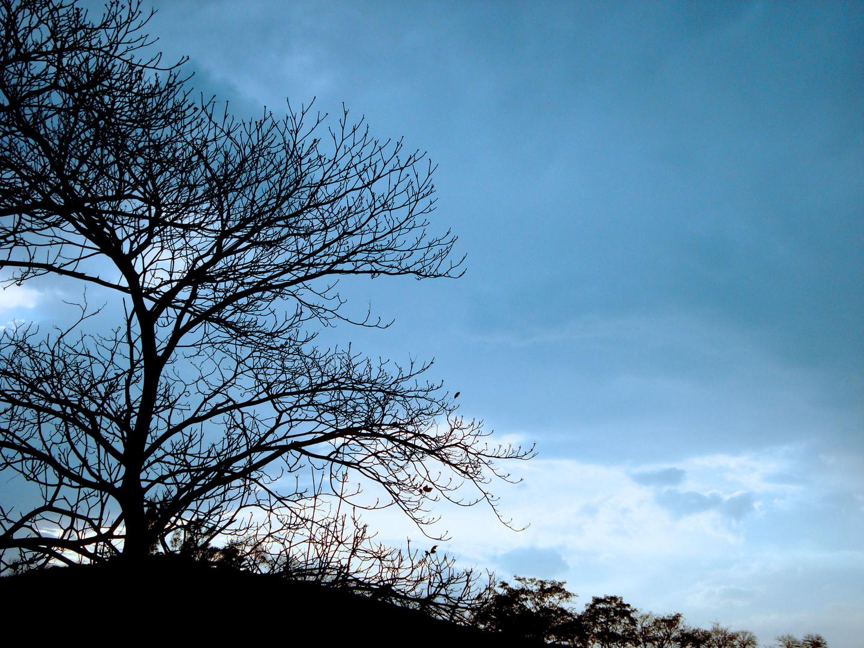 ~ La sombra de una vida...