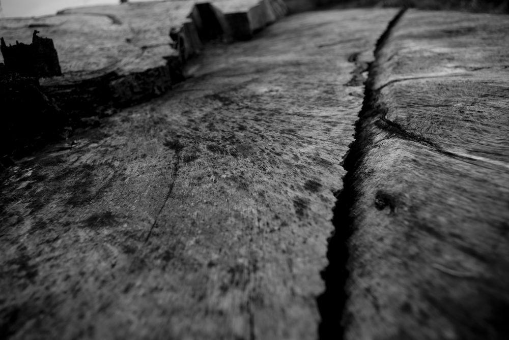 La souche d'arbre