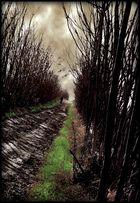 La strada che non porta a casa