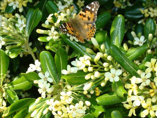 la terre, l'air : le papillon