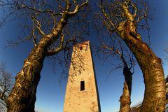 La Torre e l'albero