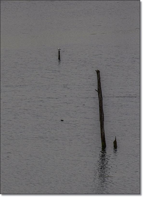 la tranquilidad de la laguna