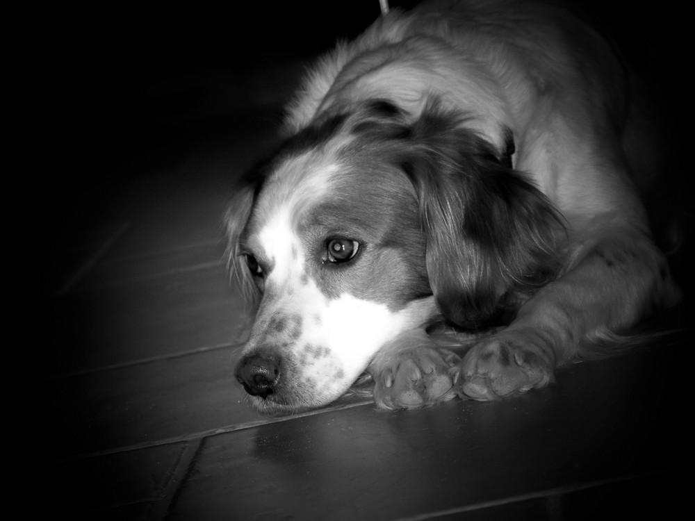 la tristesse d'Aby
