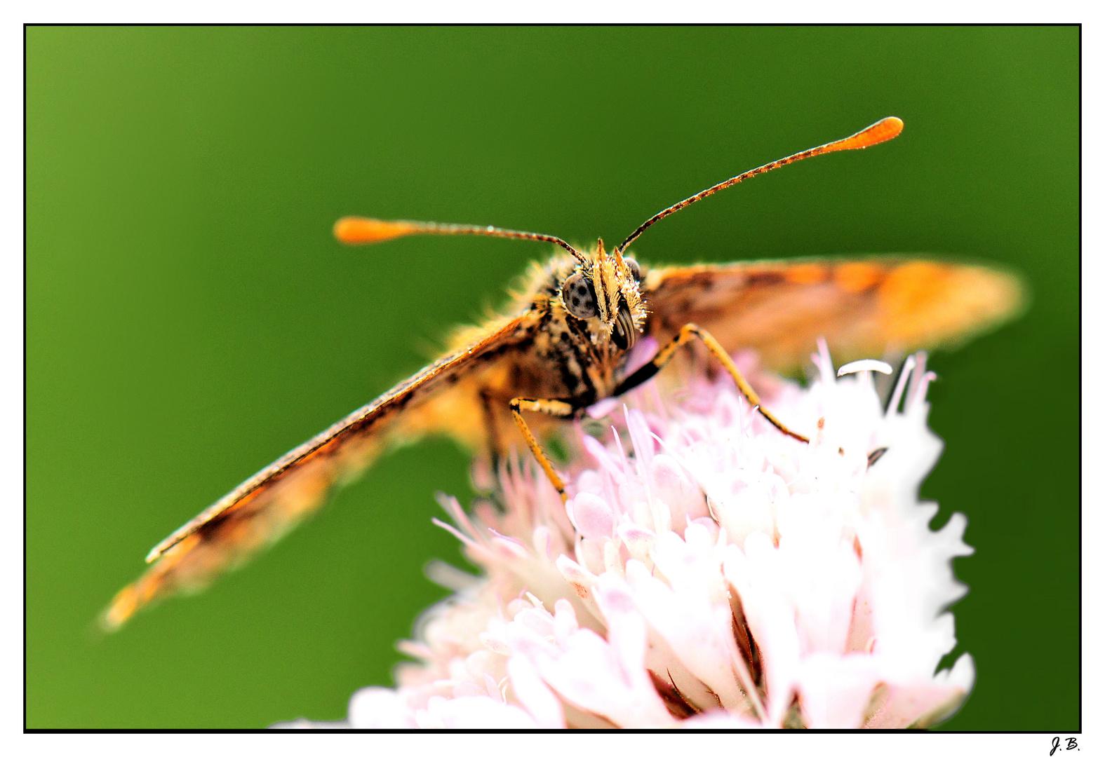 La tête dans le pollen