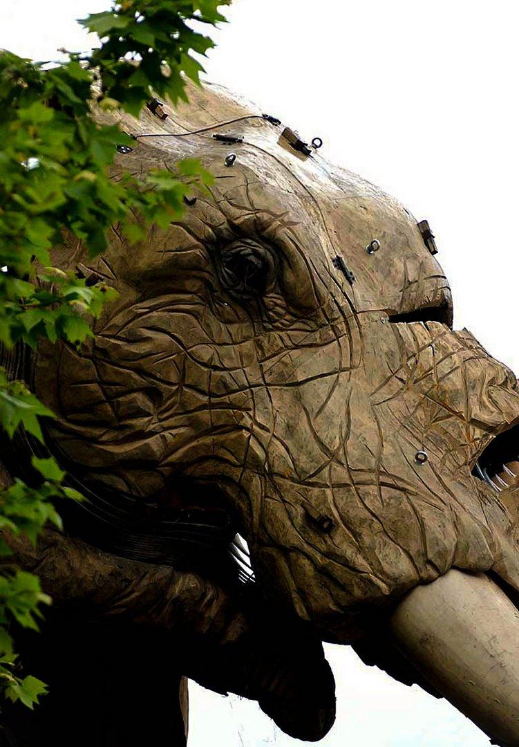 La tête de l'éléphant