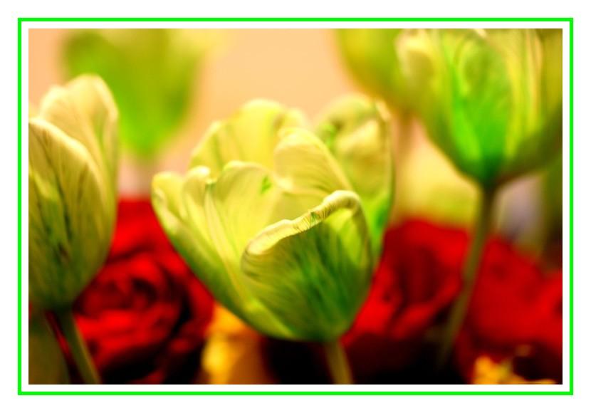la Tulipe Verte