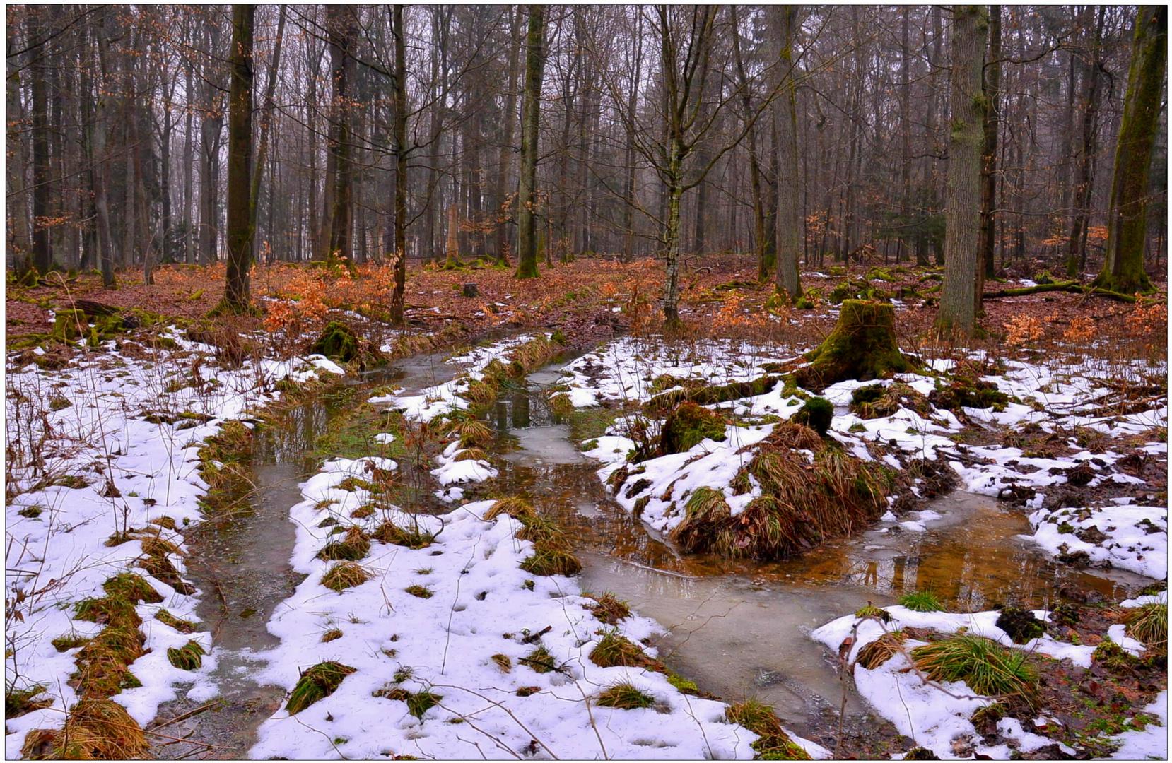 la última nieve en el bosque (der letzte Schnee im Wald)