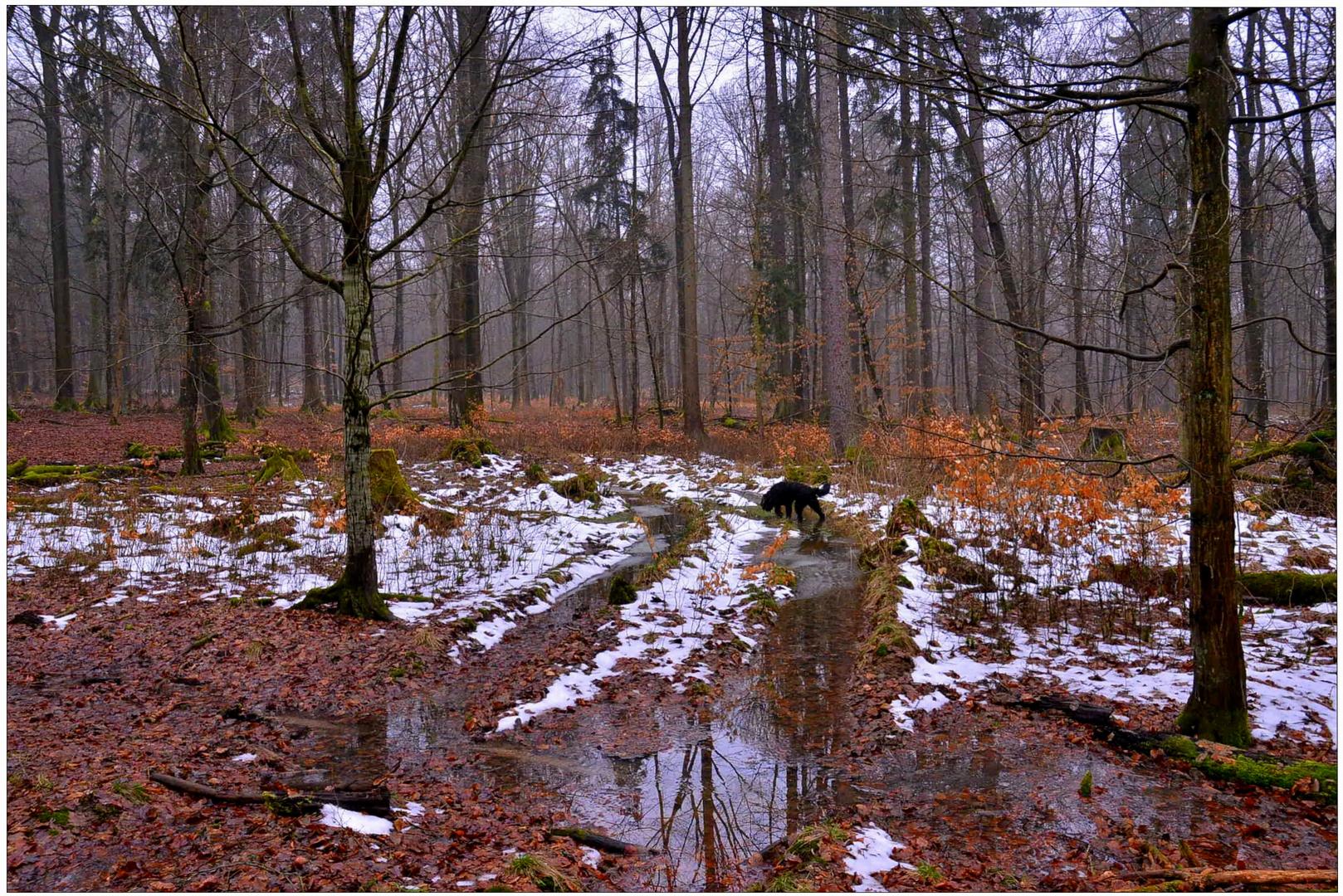 la última nieve en el bosque II (der letzte Schnee im Wald II)