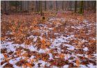 la última nieve en el bosque III (der letzte Schnee im Wald III)