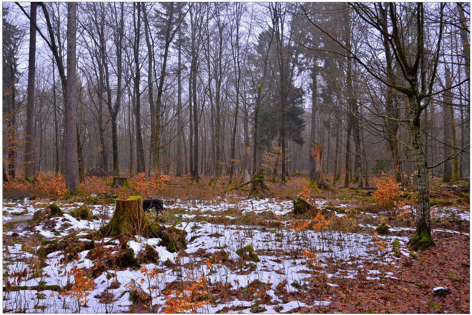 la última nieve en el bosque IV (der letzte Schnee im Wald IV)
