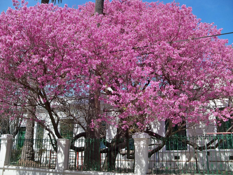 La última primavera.
