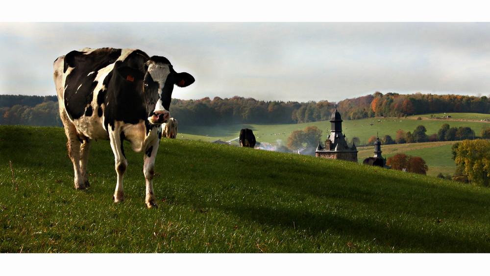 La vache