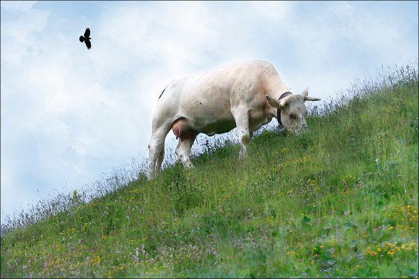 La vache du pré du voisin :-)