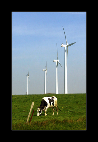 la vache écolo