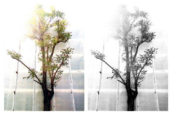 la vena artistica di un albero a primavera