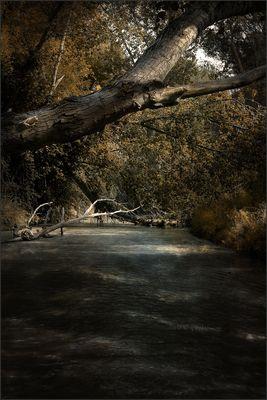 La via del bosco
