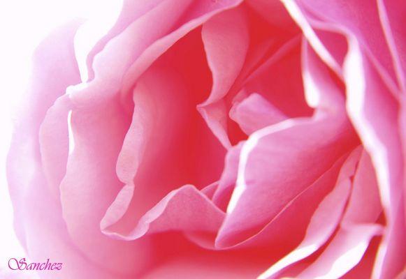 La vida de color de rosa.