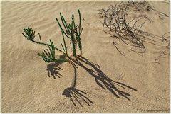 La vida en el desierto ³