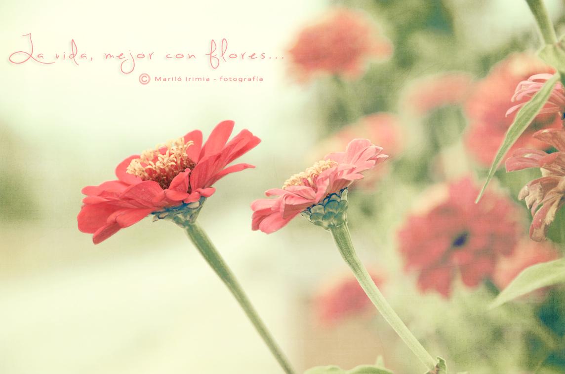 La vida mejor con flores ...