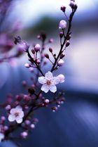 La vie en bleu d'une fleur