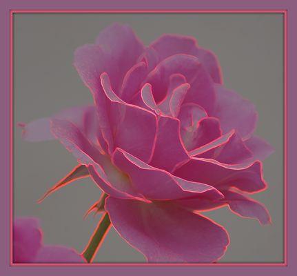 la vie en Rose ......