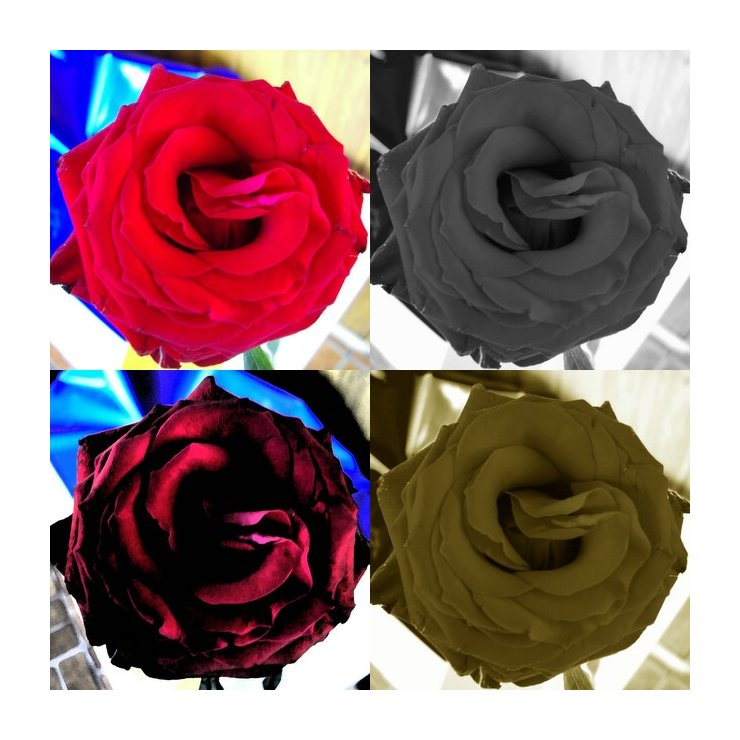 La vie en rose ...