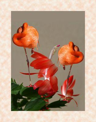 La vie en rose -- Composition aux flamants et schlumbergera zygocactus