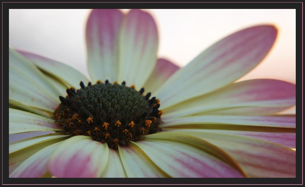 la vie en rose et blanc 5