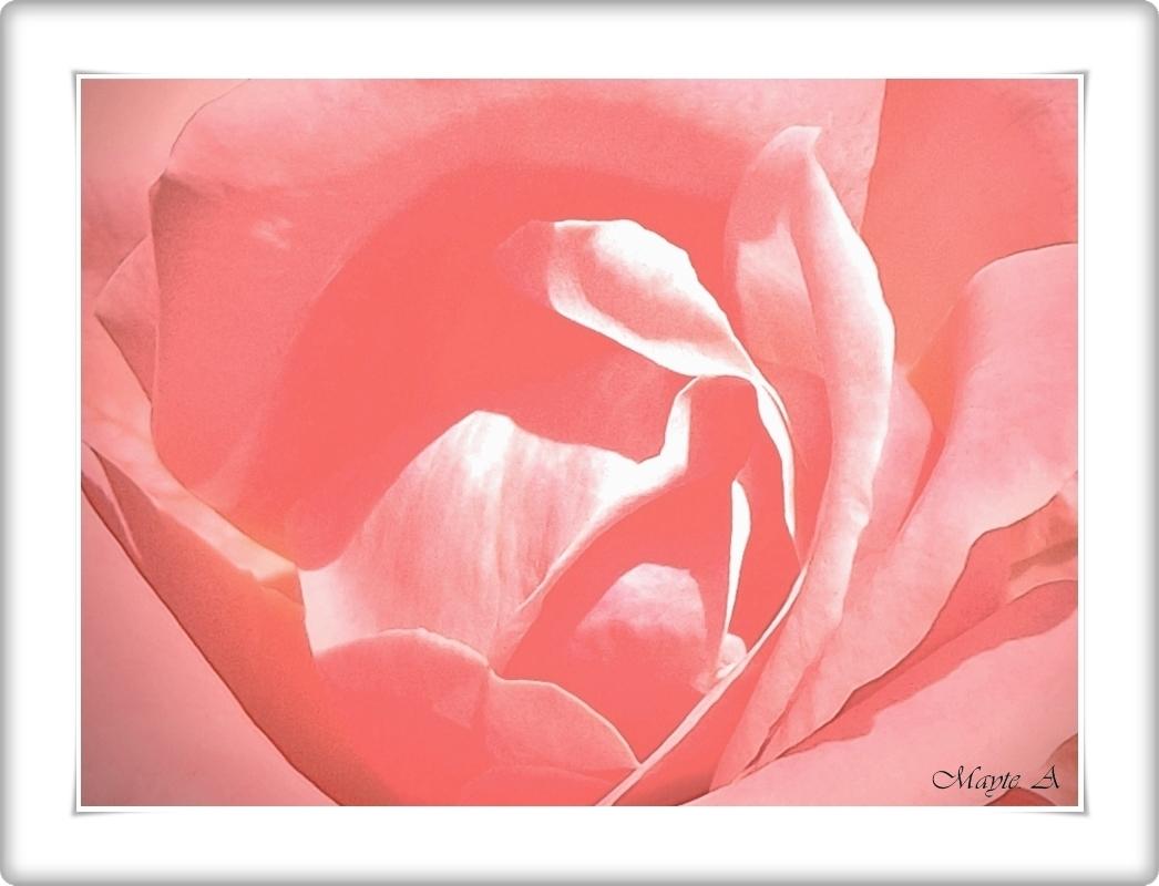 La vie En Rose ( La vida en Rosa )