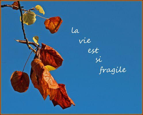 La vie est si fragile