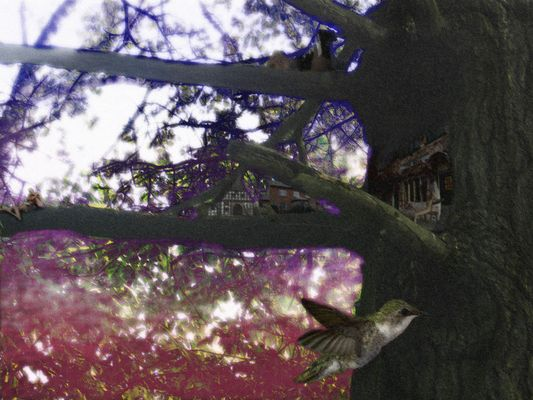 La vie sous les branches