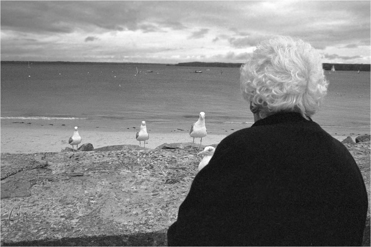 """La vieille dame aux """"pigeons de mer"""""""