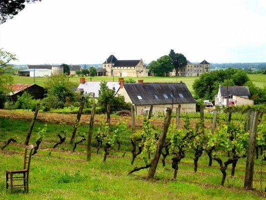 La Vigne d'Anjou ...