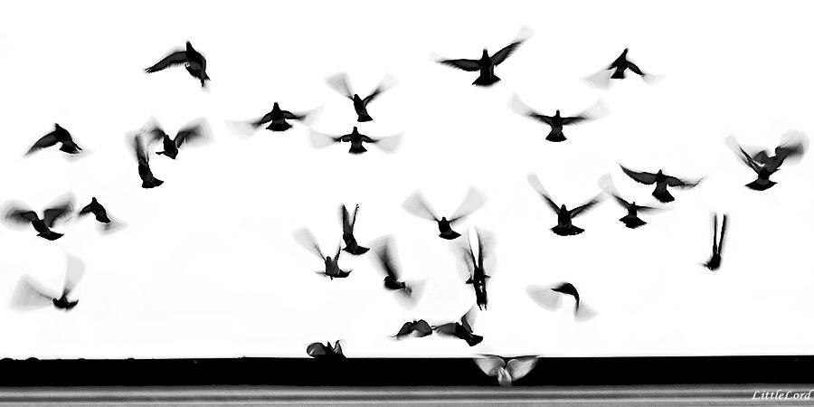 La vita in uno sbatter d'ali