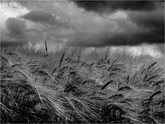 """""""La voce del vento."""" di Antonio S."""