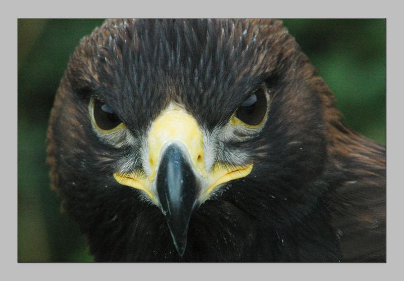 La vue de l'aigle