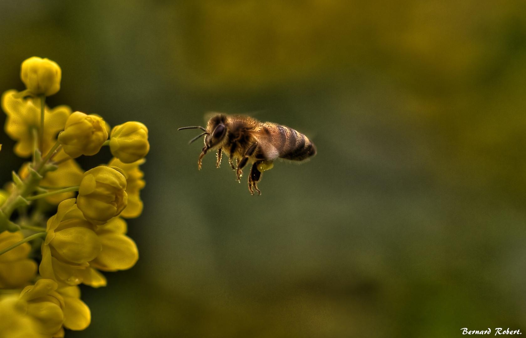 l'abeille !!!!
