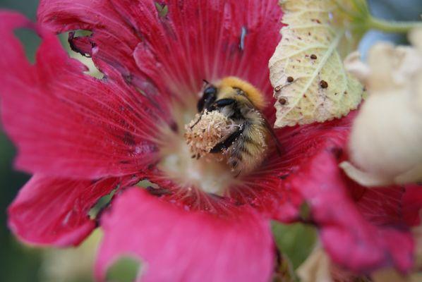 l'abeille gourmande