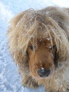 L'abominevole cane delle nevi