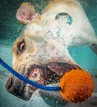 Labrador auf Tauchstation