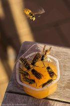 Labsal am Honigtopf
