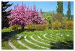 Labyrinth im Klostergarten der Insel Werd